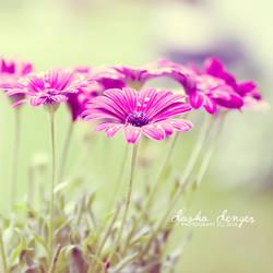 field of love by onixa