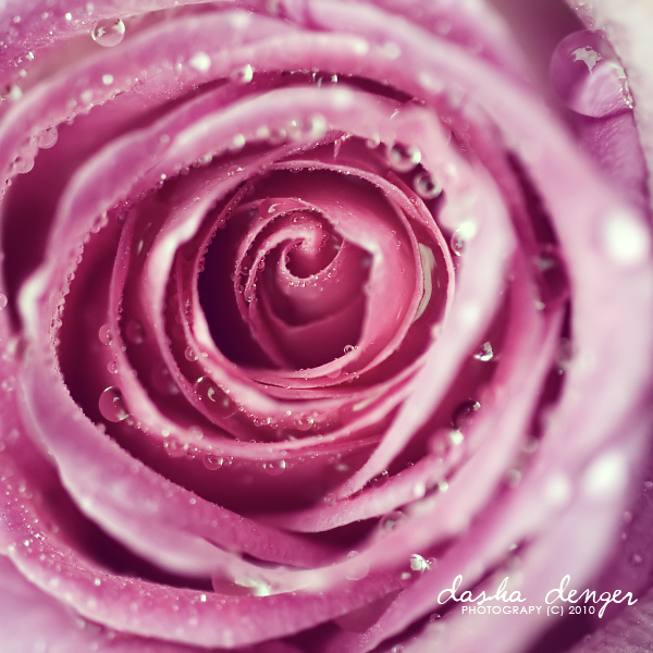 rose by onixa