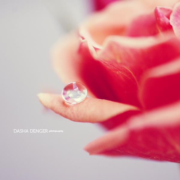 darling drop by onixa