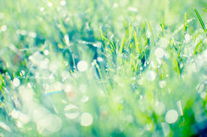 sparkling grass II by onixa