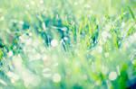 sparkling grass II