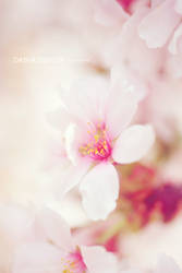 Spring is coming II