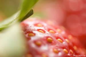 Strawberry Fields Forever by onixa