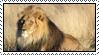 Lion by Skylark-93