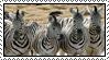 Zebra by Skylark-93