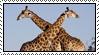 Giraffe by Skylark-93