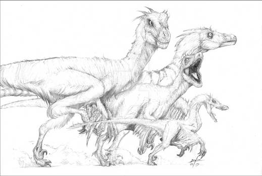 Dromaeosauride