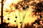 summer's farewell by kleinholz