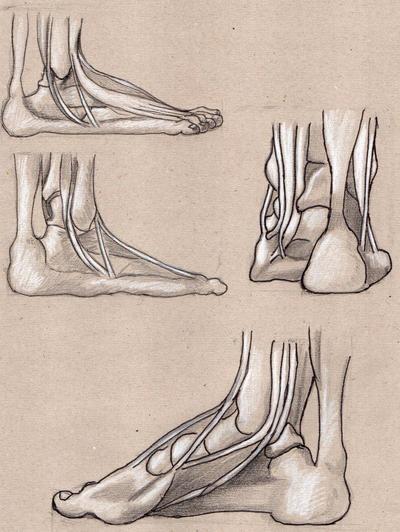 foot's bones 2 by Lemures87