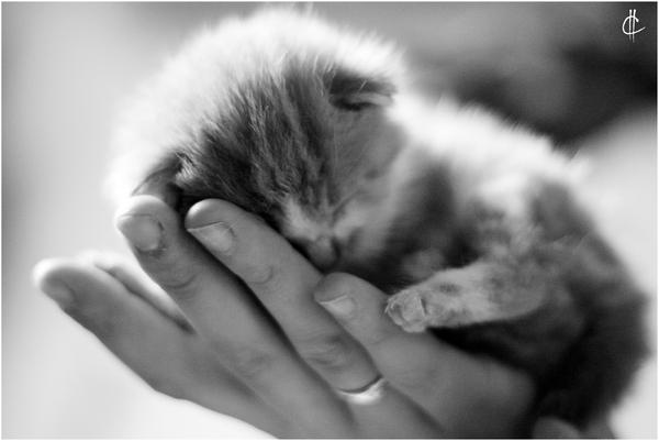 Sleep well, my Dear by Carija