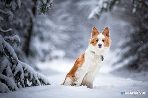 Snowflake by TobiasRoetsch