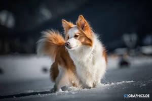 Snow Fun by TobiasRoetsch