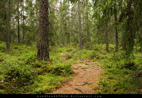 forest 006 by woodlandSTOCK