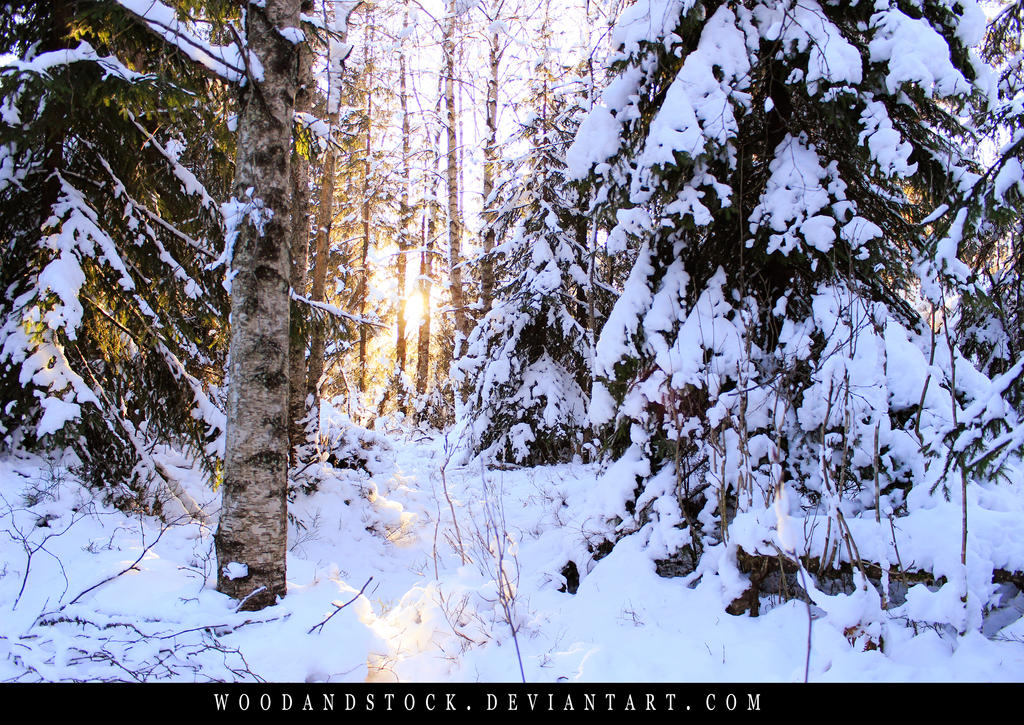 winterland by woodlandSTOCK