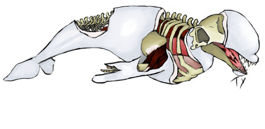 Half-dead Beluga Whale by YoursTruly-Ty on DeviantArt