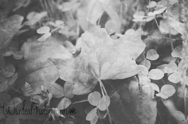 Fall is Coming by WinterPhotograph