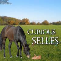 Curious Selles Card by MadiKratt