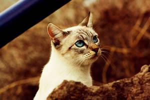 rhinestone eyes by lepositeet