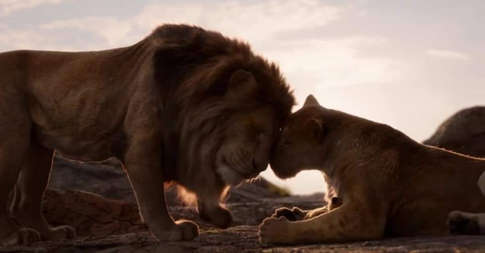 Lion King Live Action Sarabi And Mufasa By Aliciamartin851 On Deviantart