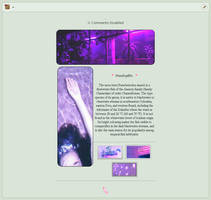 purple {Non-core custom box} by Squid-kitten