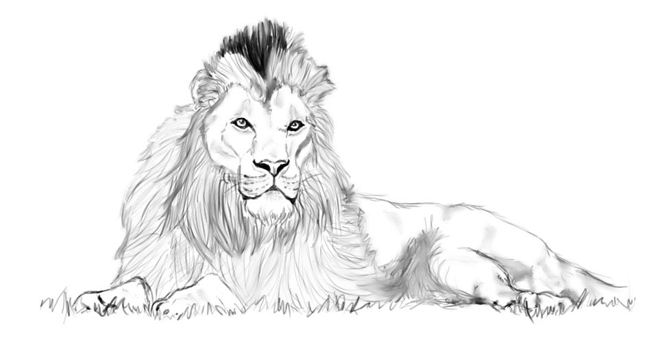 Cheetah sitting down drawing - photo#39