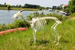Pygmy Goat Skeleton by TheKingOfDolls