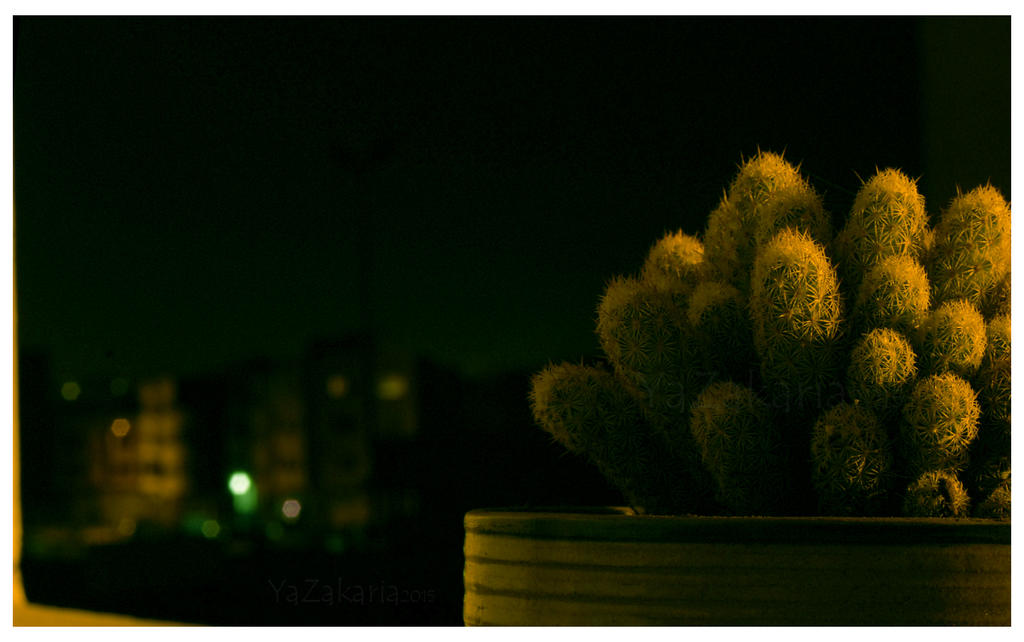 Cactus 120 by YaZakaria