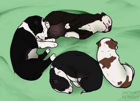 Rescued Litter (Border Collie) by Sketchy-Kennels