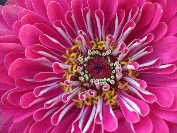 Flower 1 by auravaz