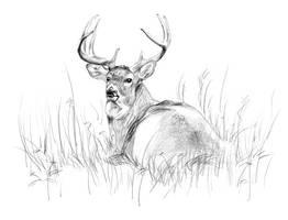 Deer_1 by Vindrea