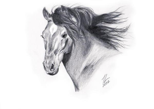horse_1 by velvetcat