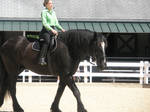 Draft Horse and Rider