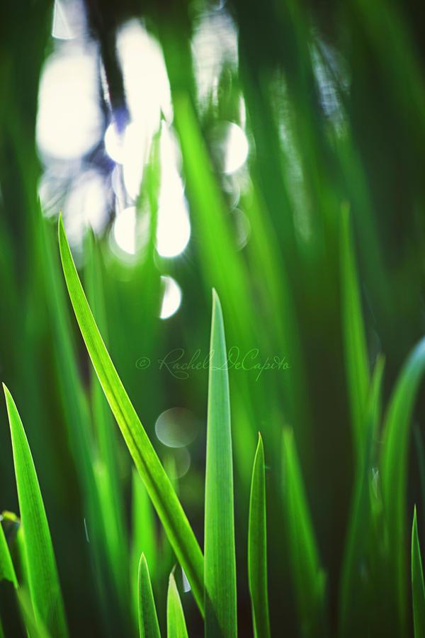 Grow by DawnFire84
