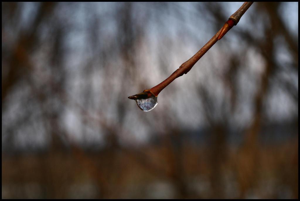 Hamadryad's tear by la-niebla