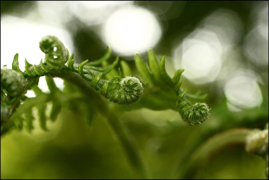 Green dream by la-niebla