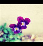 :purple beauty: