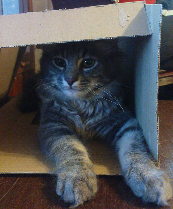 Taking over the boxes by TiaVon