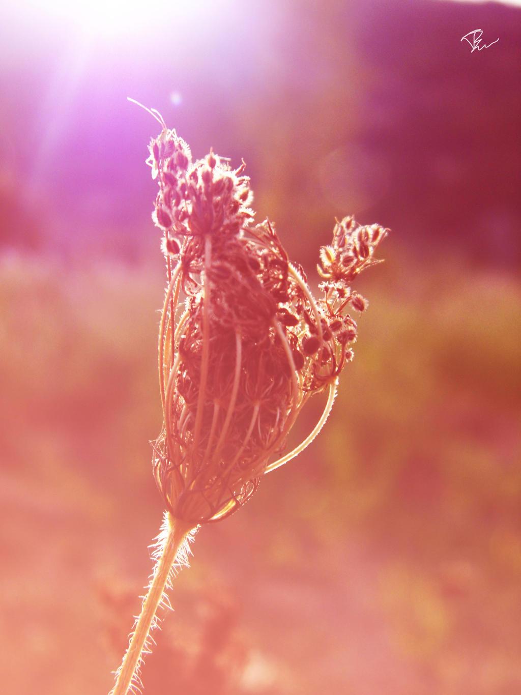 Wind and light by tinuika