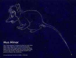 Mus Minor - color
