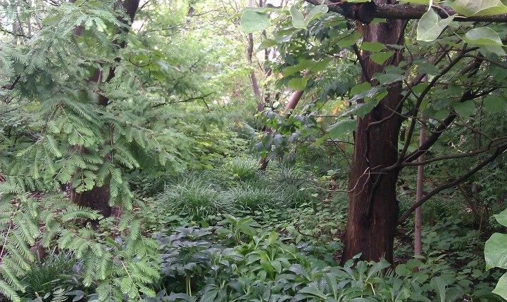 Jungle by Slicenndice