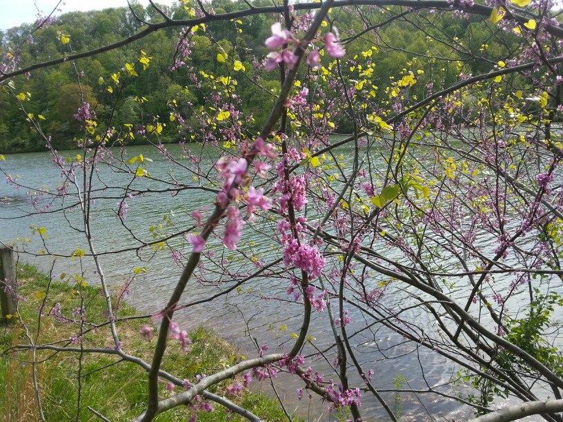Blossoms by Slicenndice