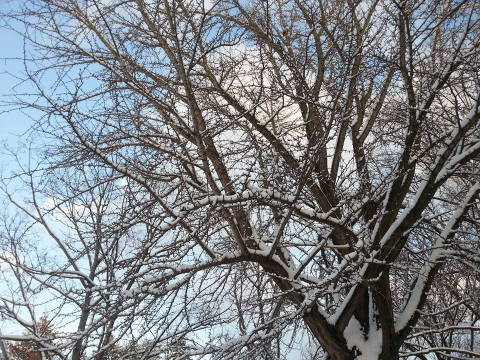 Snow-Crusted Branches by Slicenndice