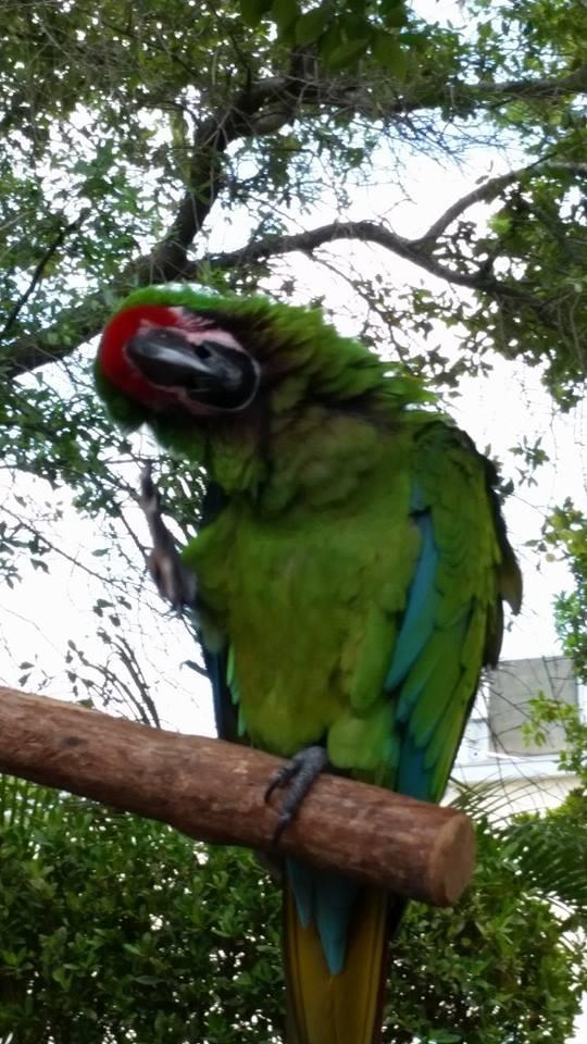 Hello Birdie by Slicenndice