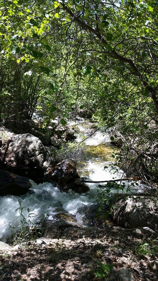 Cottonwood Creek by Slicenndice