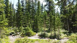 Forest by Slicenndice