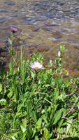 Lakeside Flowers by Slicenndice