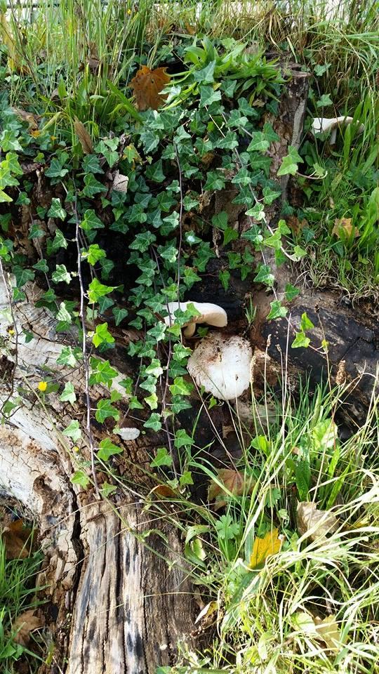 Fungi by Slicenndice