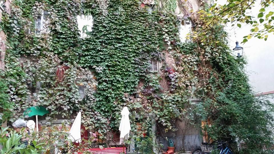 Ivy by Slicenndice