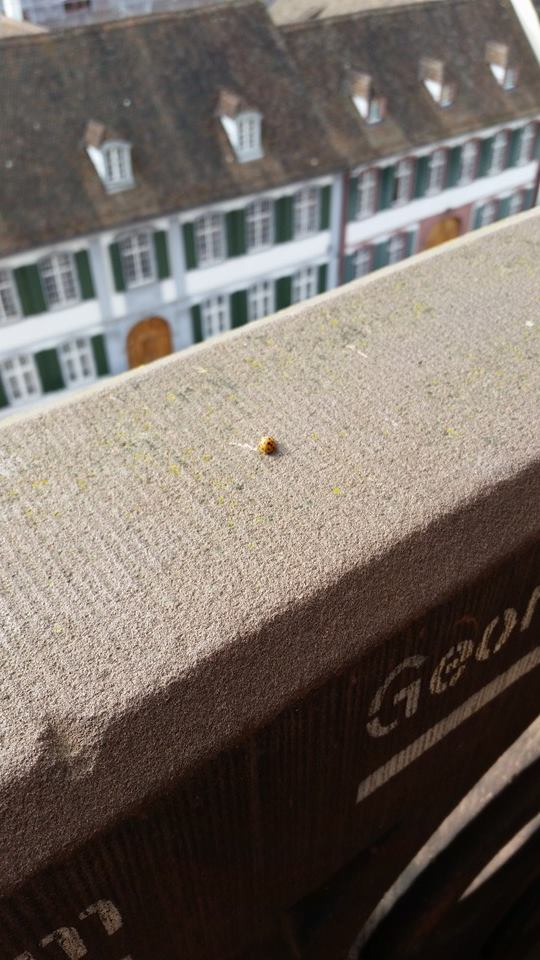 Ladybug at the Cathedral Towers by Slicenndice