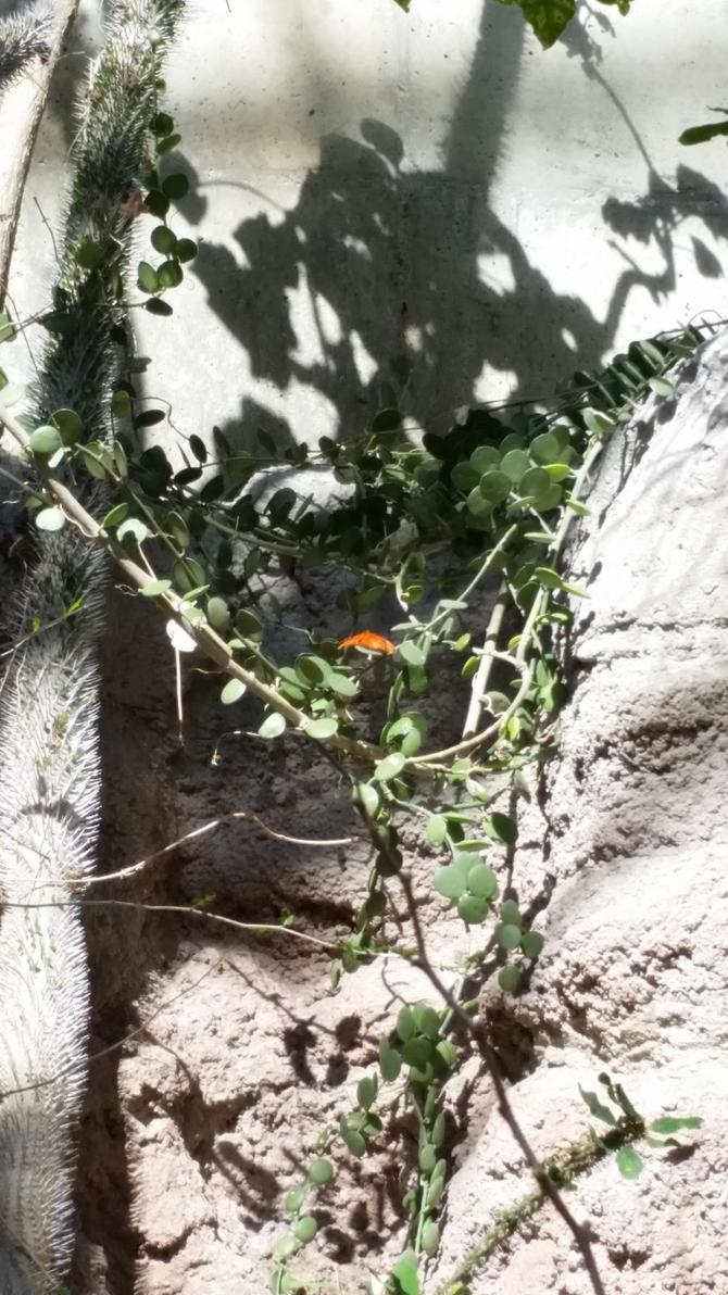 Orange Wings by Slicenndice